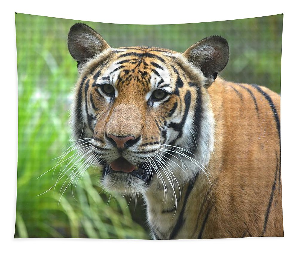 Tiger Tapestry featuring the photograph Tiger Portrait by Richard Bryce and Family