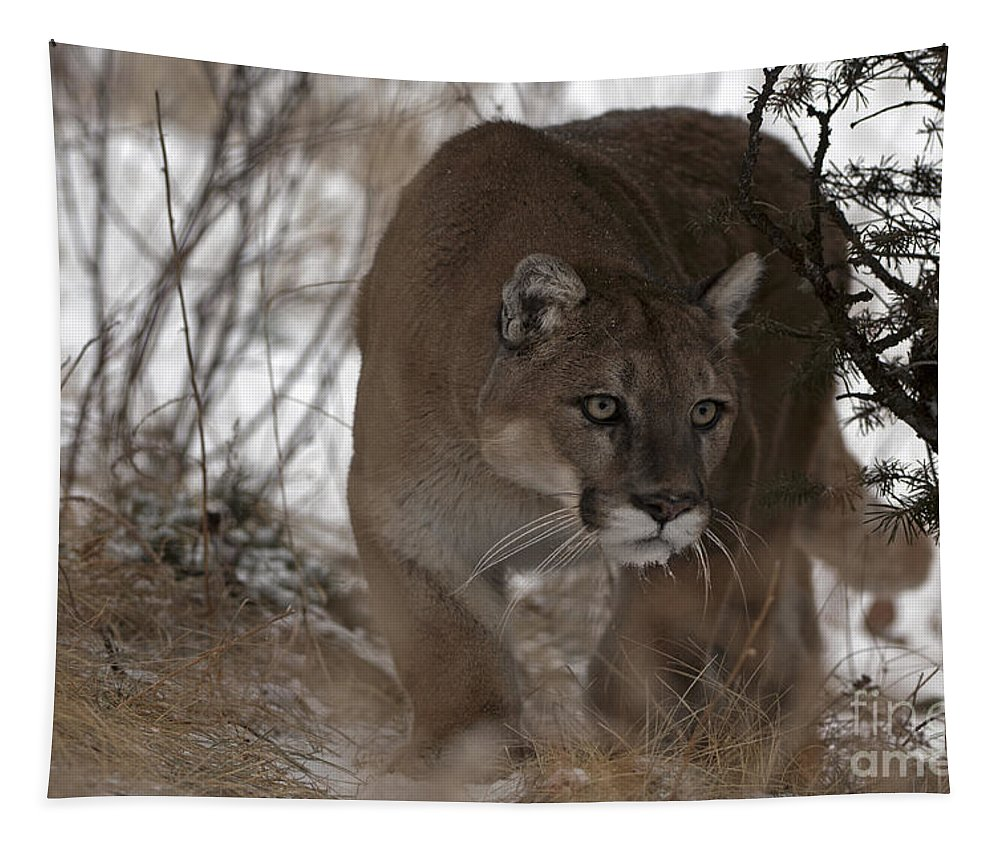 Mountain Lion Tapestry featuring the photograph Time Stands Still by Wildlife Fine Art