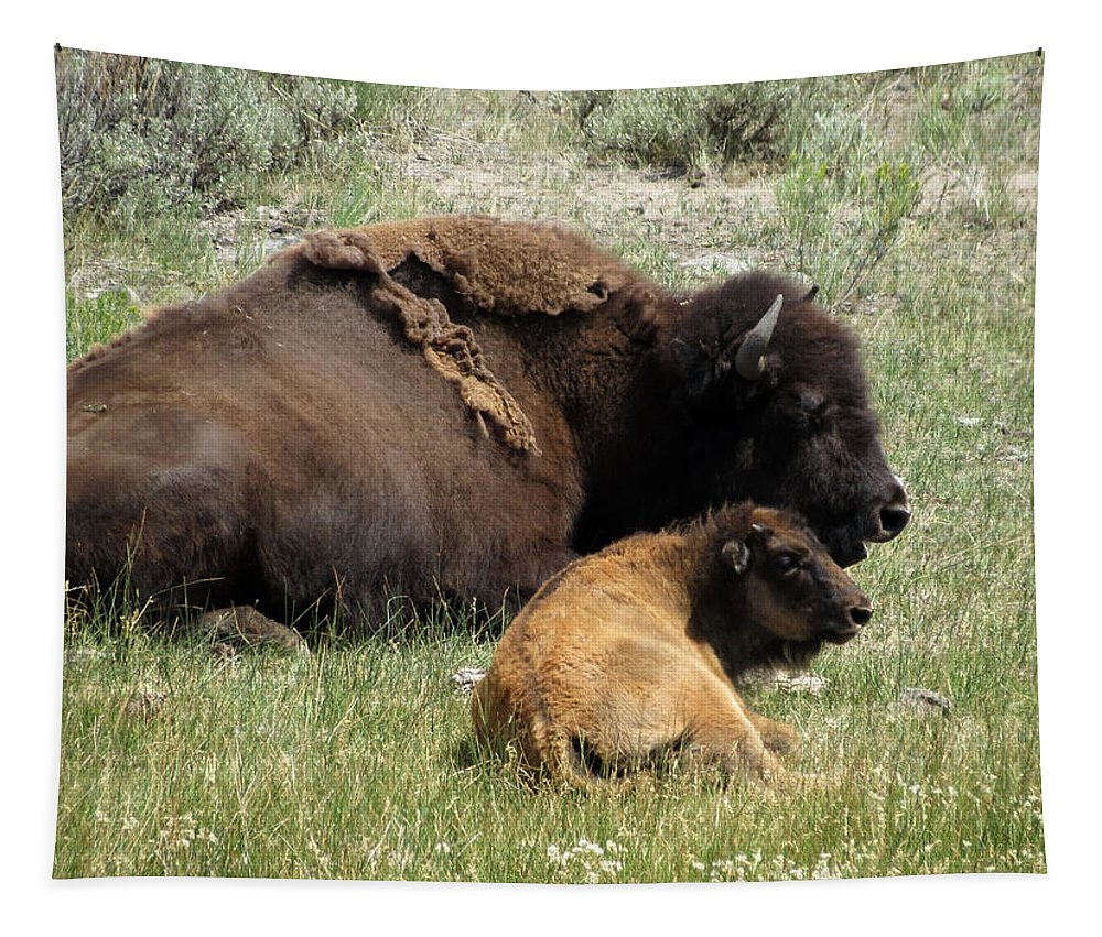 Bison Tapestry featuring the photograph Time To Rest by Laurel Powell