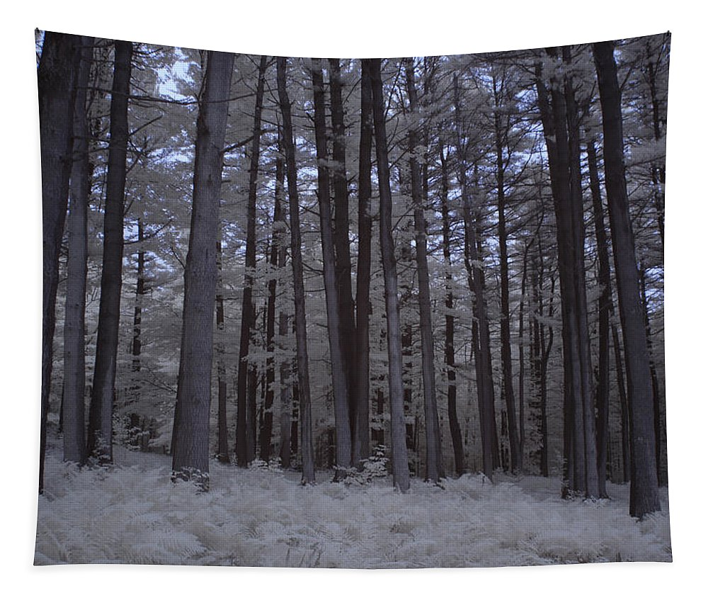 Image By Jeff Folger Tapestry featuring the photograph Towering Trees Over Ferns In Blue by Jeff Folger