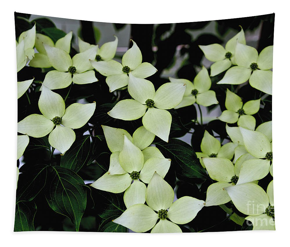 White Tapestry featuring the photograph Tree Flowers by William Norton
