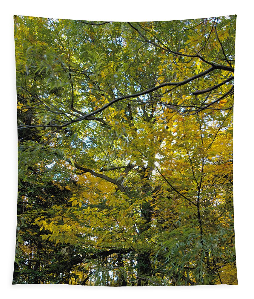 Tree Tapestry featuring the photograph Tree Hug by William Norton