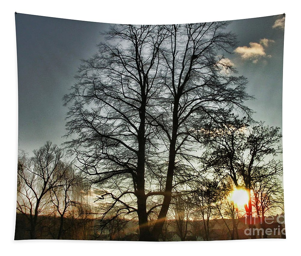 Tree Of Light Tapestry featuring the photograph Tree Of Light by Nina Ficur Feenan