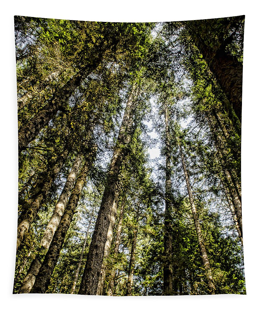 Trees Tapestry featuring the photograph Tree Tops by Heather Applegate