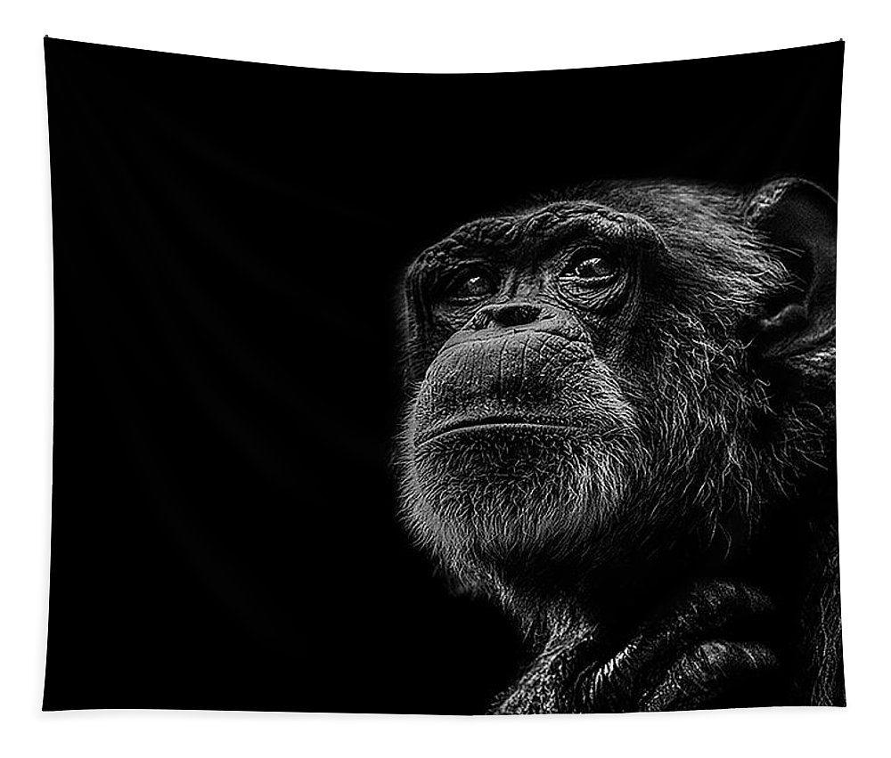 Chimpanzee Tapestry featuring the photograph Trepidation by Paul Neville