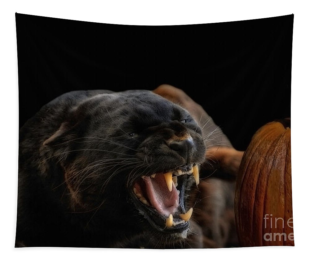 Halloween Tapestry featuring the photograph Trick Or Treat by Wildlife Fine Art
