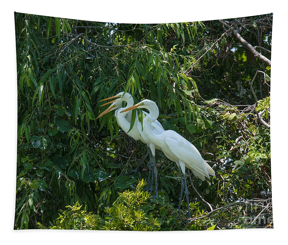 Egret Tapestry featuring the photograph Trio Of Egret Love by Dale Powell