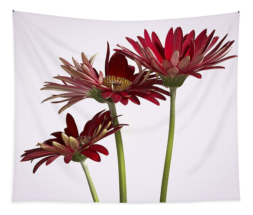 Group Of Gerbera Daisys Tapestry featuring the photograph Trio Of Red Gerbera Daisys by Jean Noren