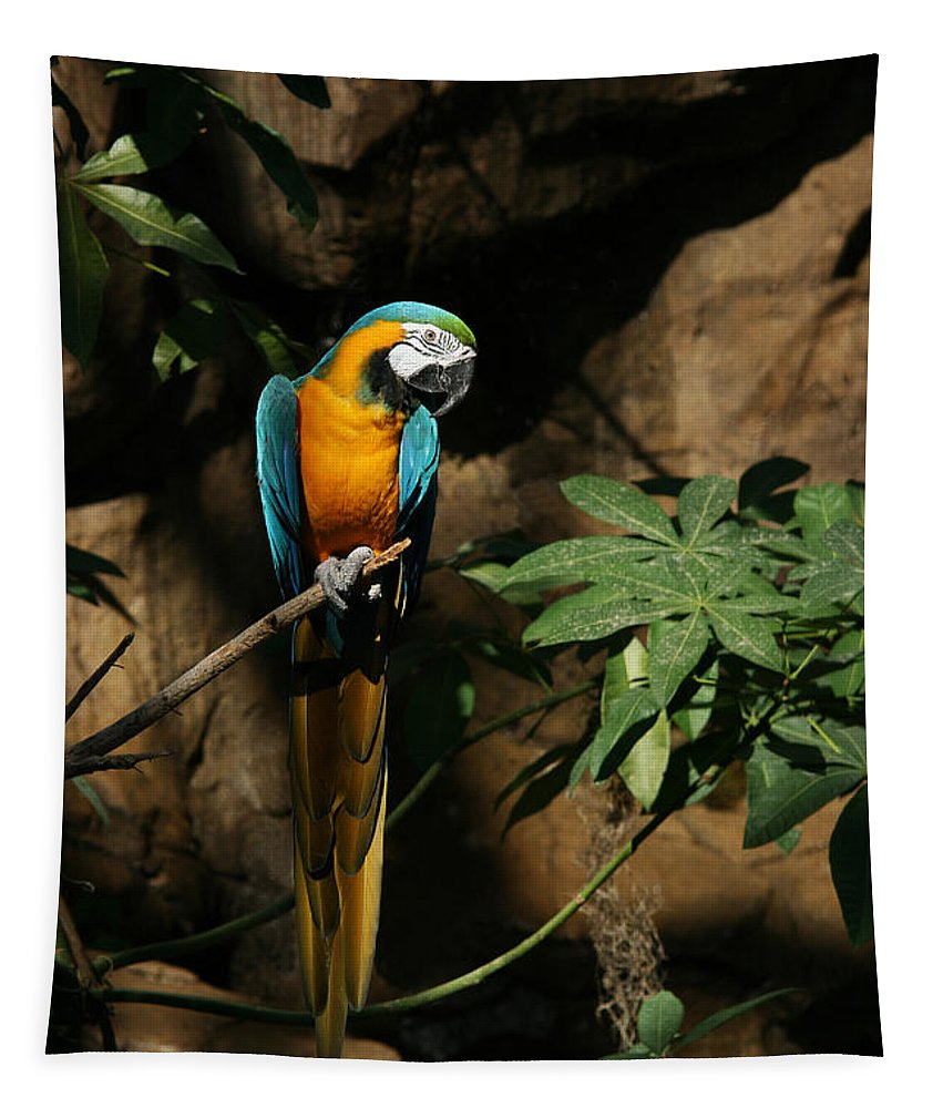 Blue And Gold Macaw Tapestry featuring the photograph Tropical Parrot by Judy Whitton