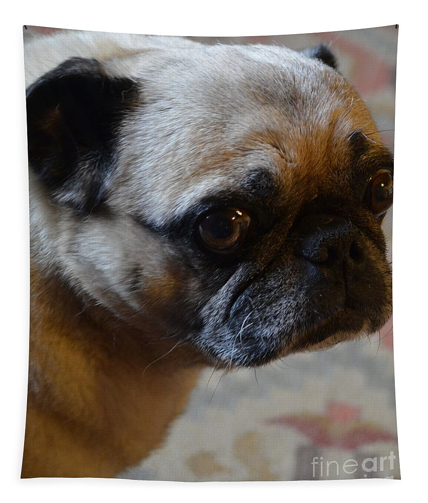 Pug Tapestry featuring the photograph Tuffy 3 by Paulina Roybal