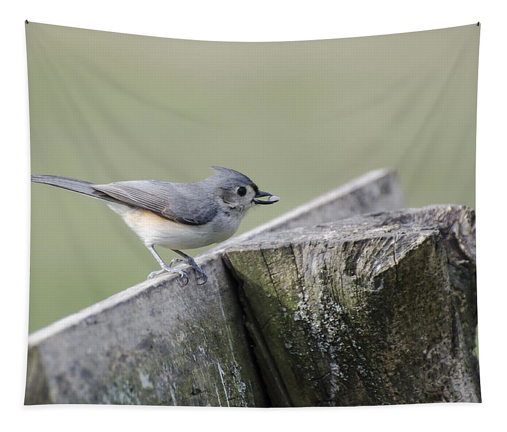 Tufted Titmouse Tapestry featuring the photograph Tufted Titmouse With Seed by Heather Applegate