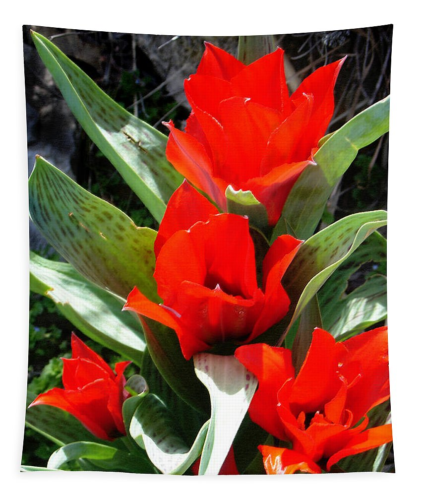 Tulips Tapestry featuring the photograph Tulip Flame by Steve Karol