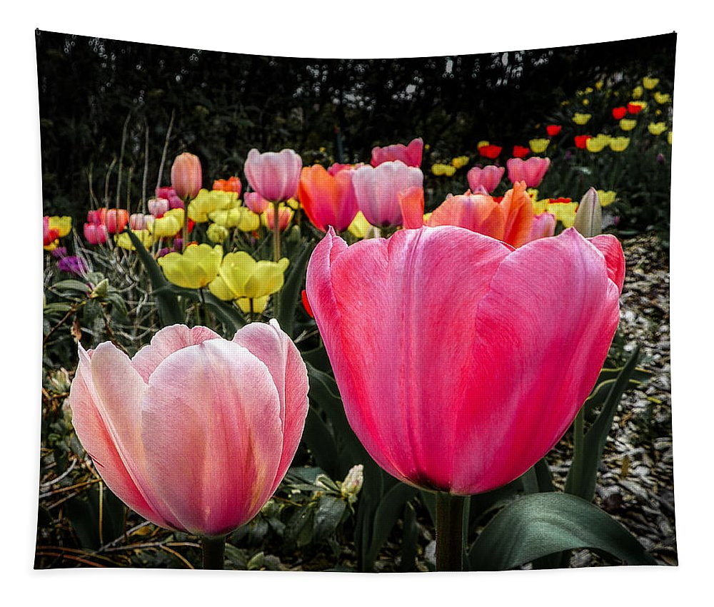 Flower Tapestry featuring the photograph Tulip Trail by Jon Woodhams