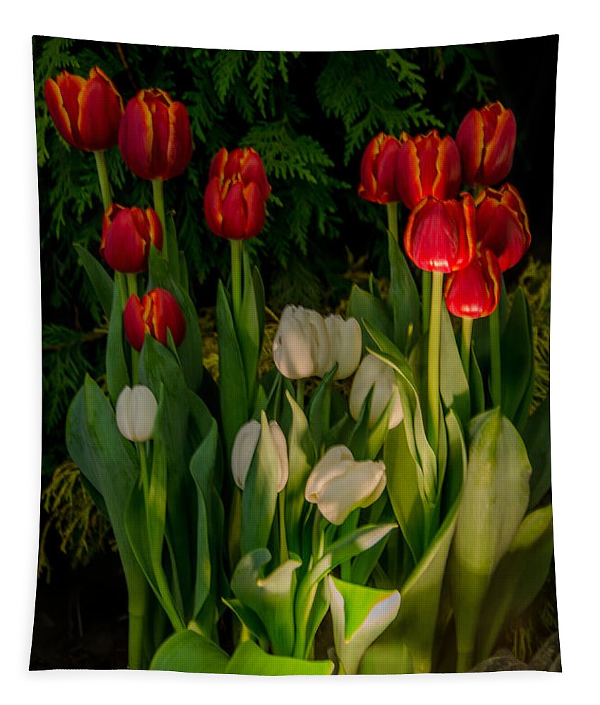 Tulips Tapestry featuring the photograph Tulips In Bloom by Eleanor Bortnick
