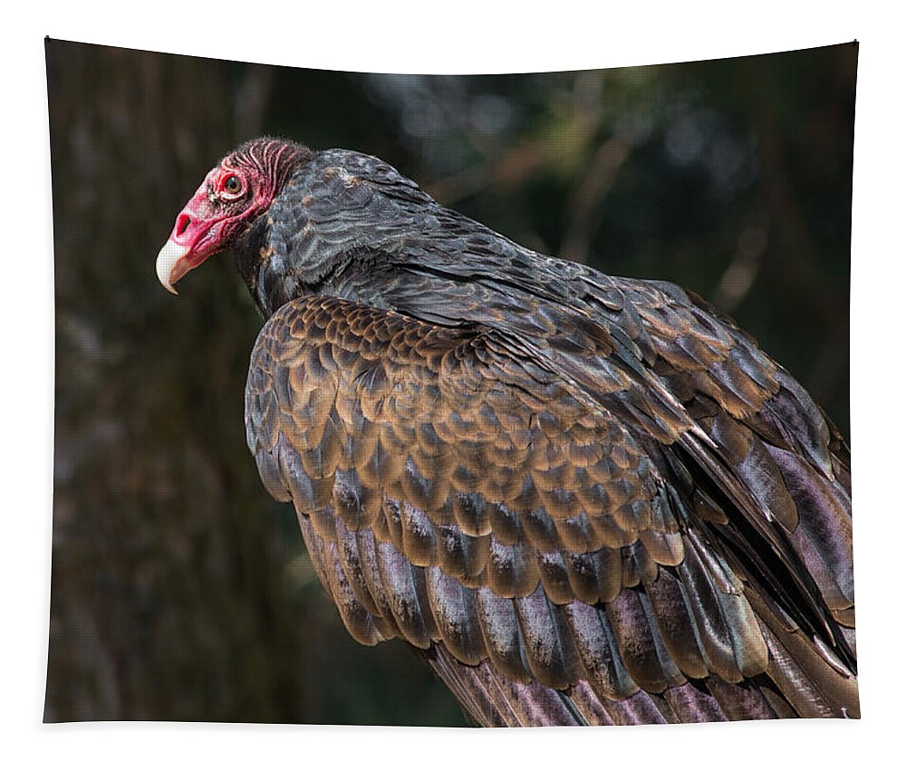 Turkey Vulture Tapestry featuring the photograph Turkey Vulture by Dale Kincaid
