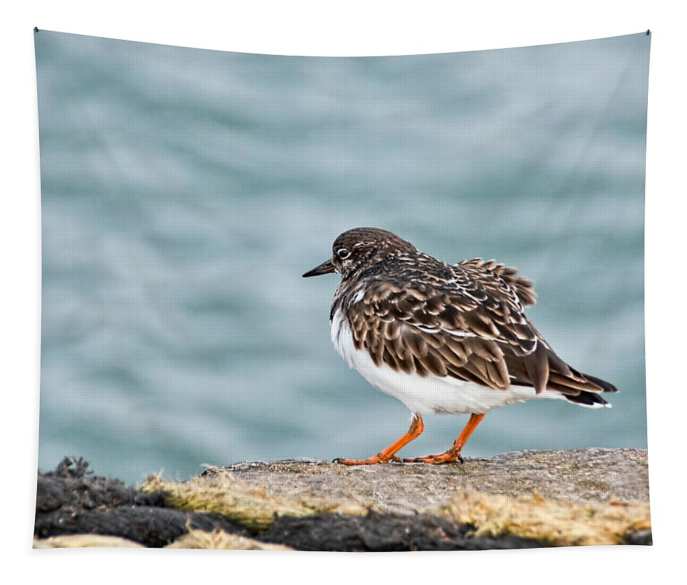 Turnstone Tapestry featuring the photograph Turnstone by Susie Peek
