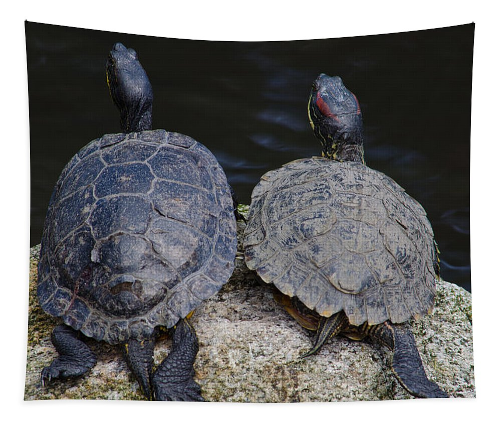 Wildlife Tapestry featuring the photograph Turtle Love by Tikvah's Hope