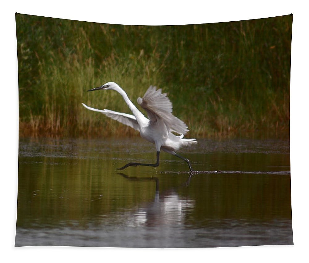 Great Egret Tapestry featuring the photograph Twinkle Toes by Leticia Latocki