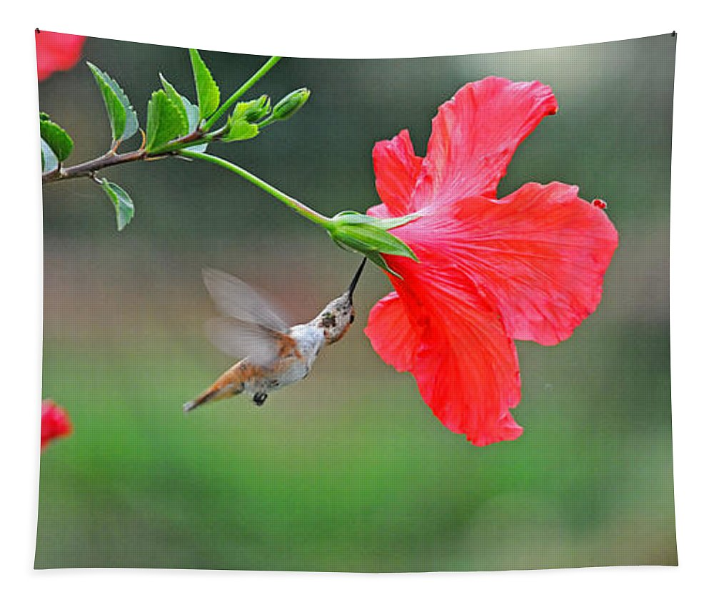 Hummers Tapestry featuring the photograph Twist N Sip by Lynn Bauer