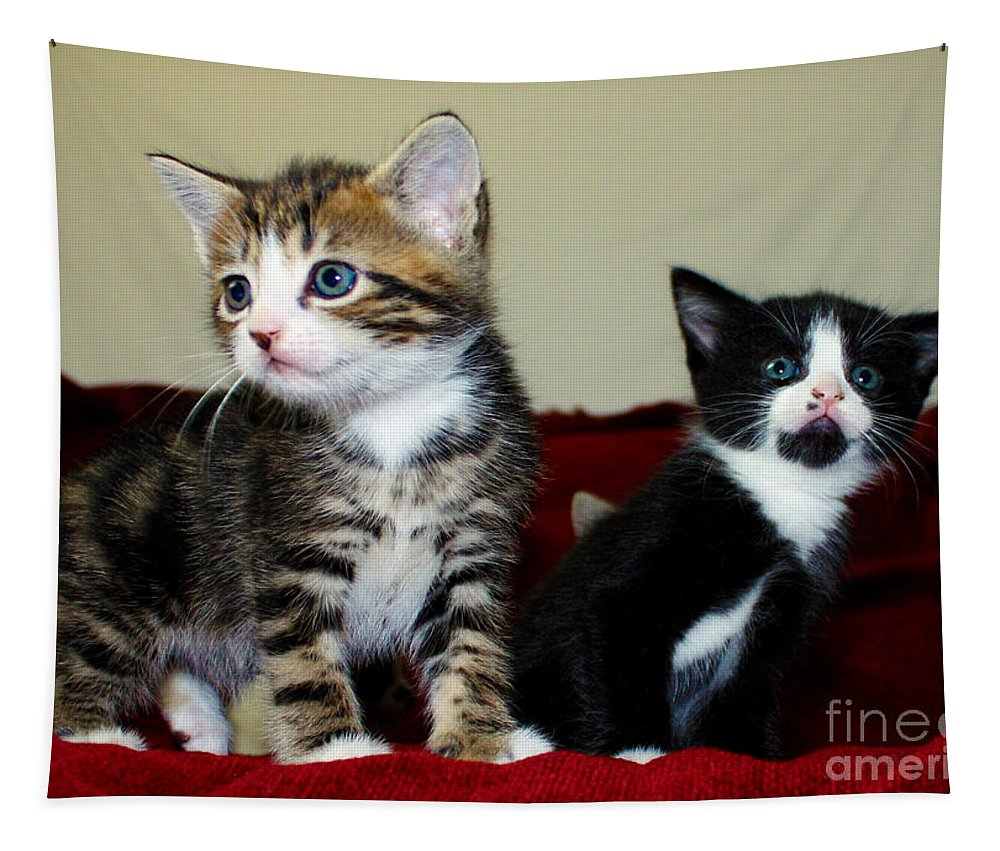 Kitten Tapestry featuring the photograph Two Adorable Kittens by Terri Waters