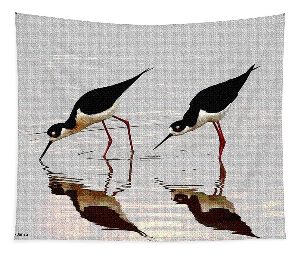 Two Black Neck Stilts Tapestry featuring the photograph Two Black Neck Stilts Eating by Tom Janca