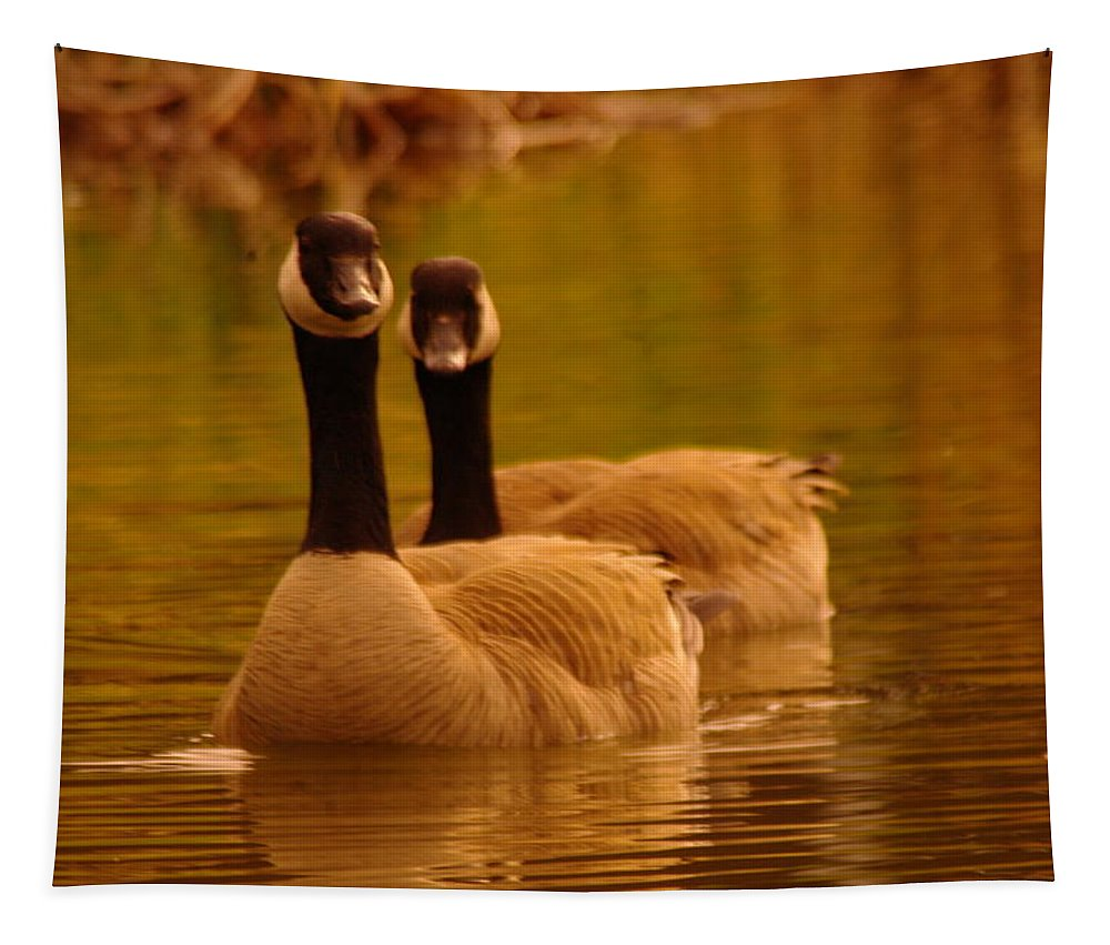 Birds Tapestry featuring the photograph Two Geese In A Line by Jeff Swan