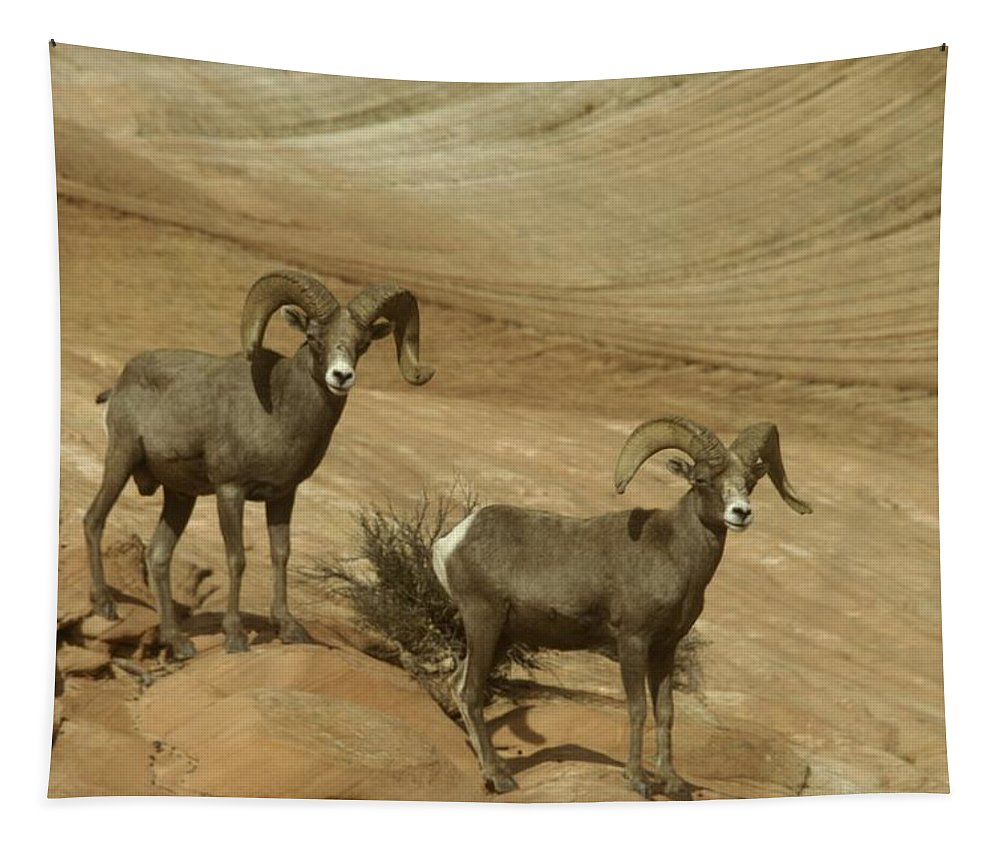 Horns Tapestry featuring the photograph Two Male Rams At Zion by Jeff Swan