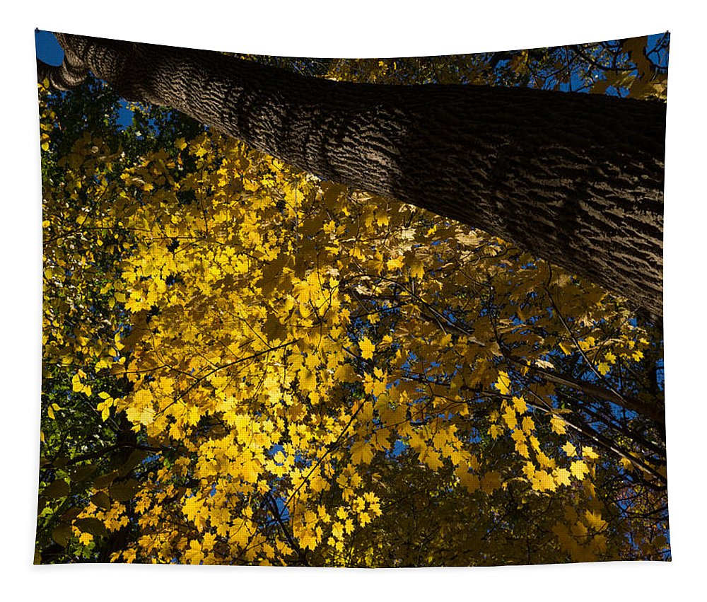 Under The Trees Tapestry featuring the photograph Under The Trees - Lambton Woods Toronto Canada by Georgia Mizuleva