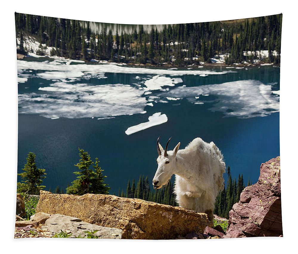 Mountain Goat Tapestry featuring the photograph Up From The Lake by Kathleen Bishop