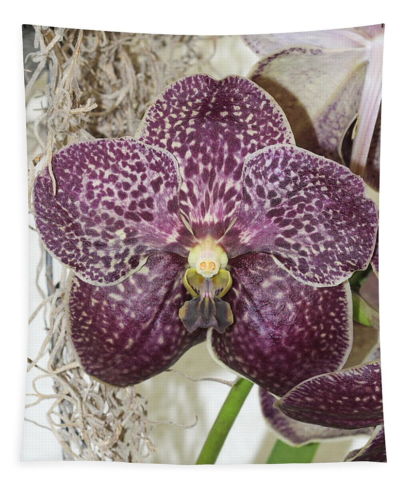 Orchid Tapestry featuring the photograph Vanda Robert's Delight by Judy Whitton