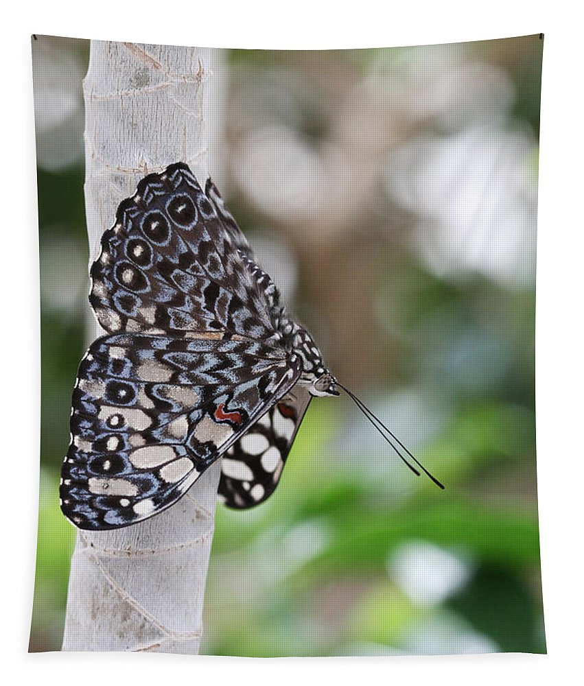 Butterfly Tapestry featuring the photograph Variable Cracker Butterfly by Judy Whitton