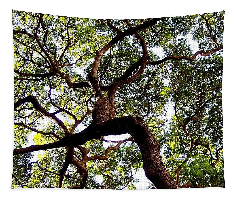Trees Tapestry featuring the photograph Veins Of Life by Karen Wiles