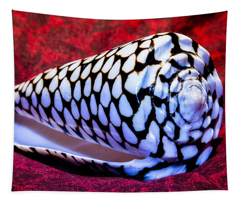Conus Tapestry featuring the photograph Venomous Conus Shell by Robert Storost