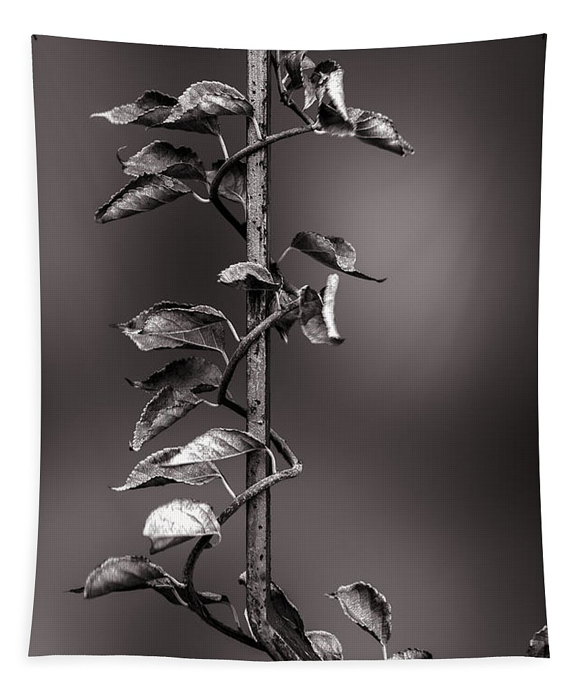 Vine Tapestry featuring the photograph Vine On Iron by Bob Orsillo