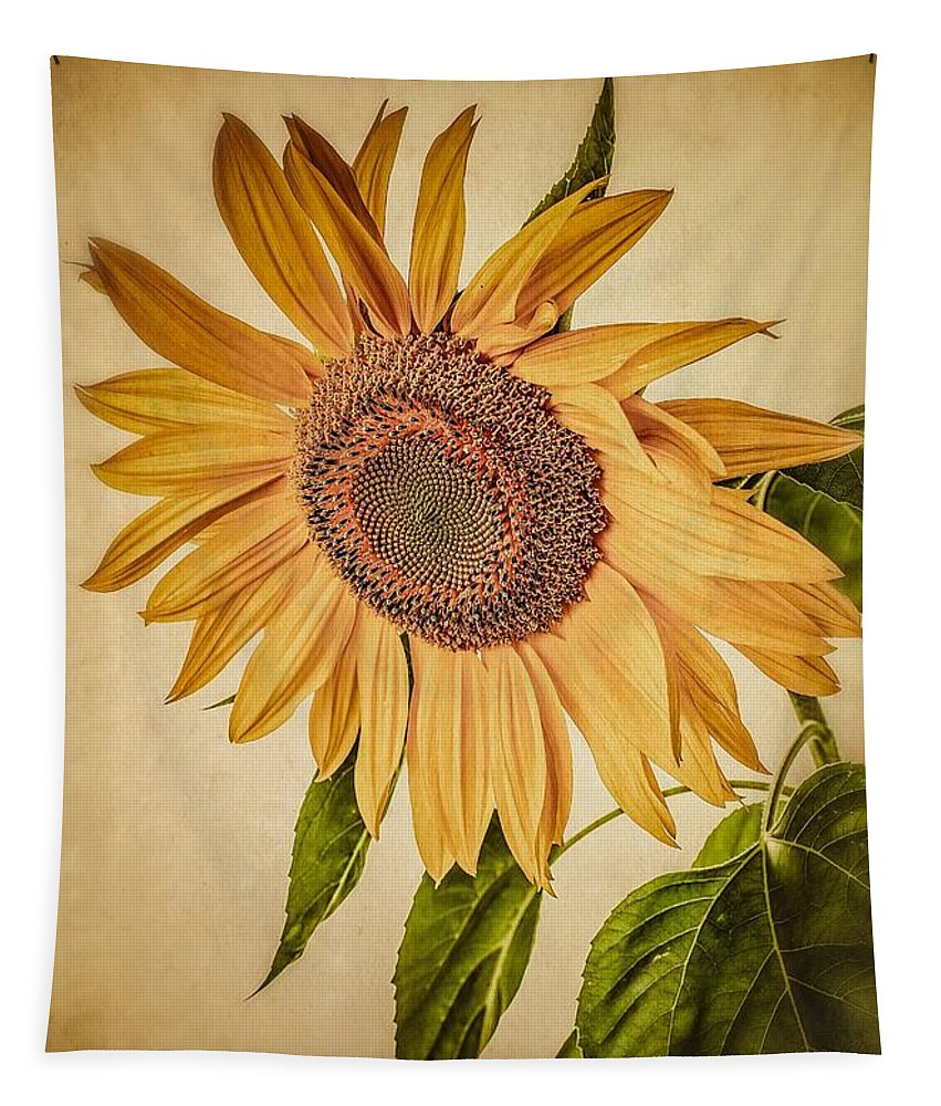 Field Tapestry featuring the photograph Vintage Sunflower by Edward Fielding
