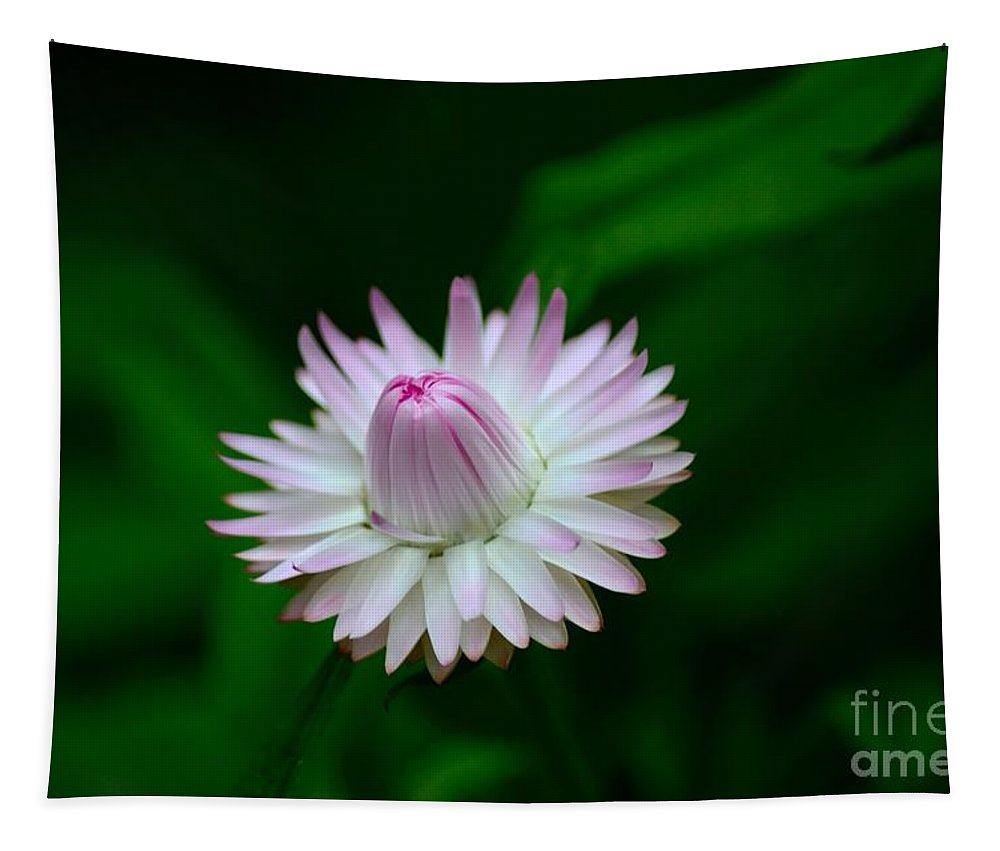 Bloom Tapestry featuring the photograph Violet And White Flower Sepals And Bud by Imran Ahmed