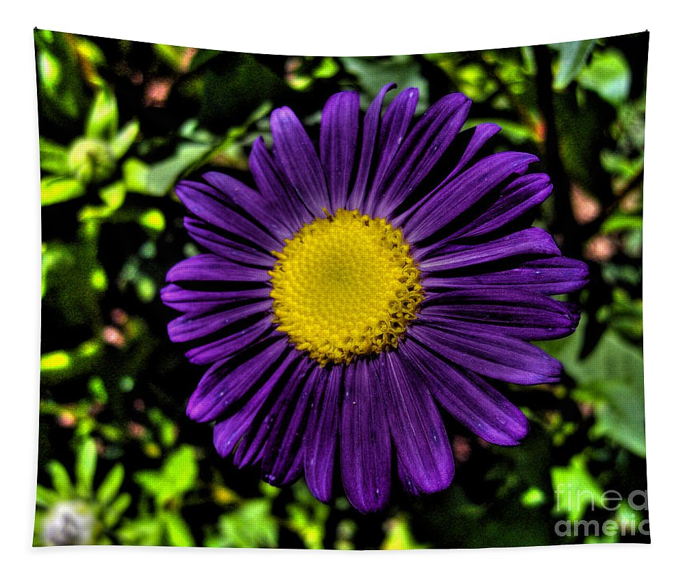 Aster Tapestry featuring the photograph Violet Aster by Nina Ficur Feenan