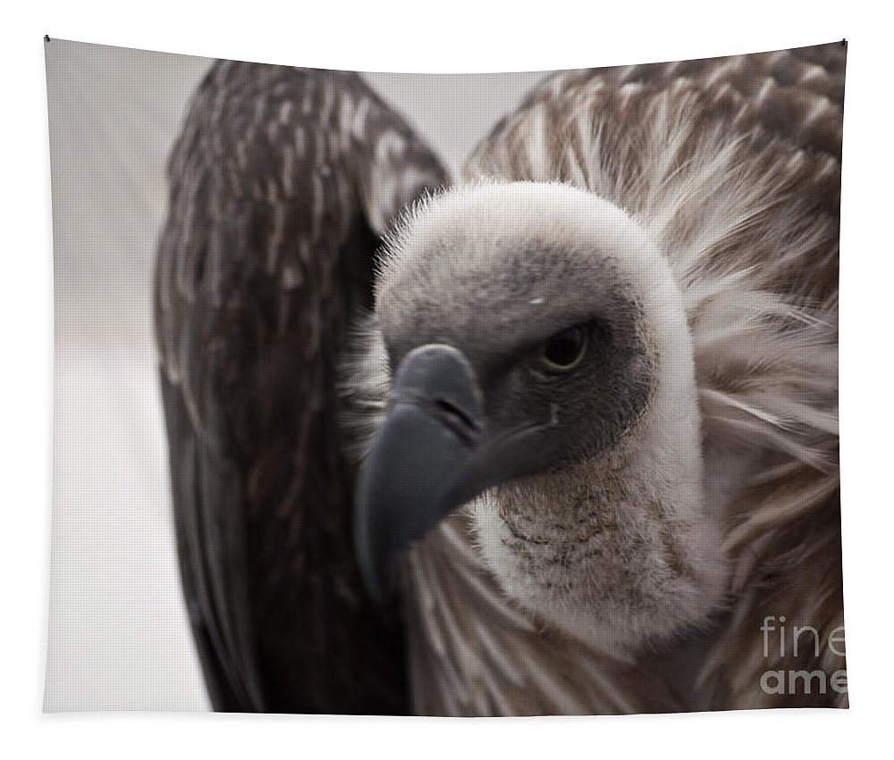 Vulture Tapestry featuring the photograph Vulture by Steve Purnell
