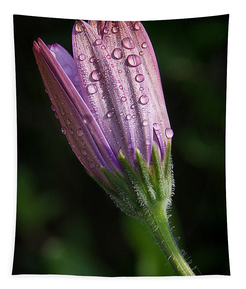 Daisy Tapestry featuring the photograph Waiting For The Sun by Susie Peek