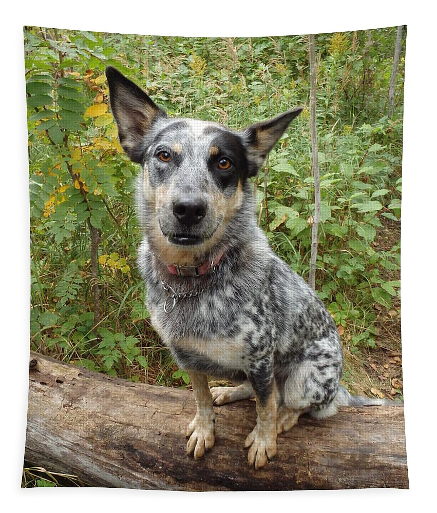 James Peterson Photography Australian Dog Canine Canines Cattle Animal Animals Pet White Blue Heeler Heelers Nature Man's Best Friend Friends Furry Black Cute Cutie Cuties Breed Breeds Domestic Portrait Portraits Pose Posing Beautiful Outdoors Outdoor Acd Mammal Mammals Play Pedigree Posed Doggie Pets Merle Dogs Adorable Creature Blue-merle Sheepdog Sheepdogs Herding Working Work Walking Walk Companion Companions Darla Sit Sitting Log Green North Shore Woods Forest Tettegouche State Park Parks Tapestry featuring the photograph Wanna Play by James Peterson
