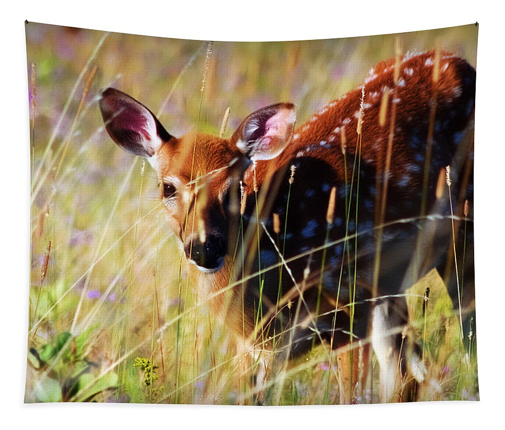 White Tail Deer Tapestry featuring the photograph Wary by Heather Applegate