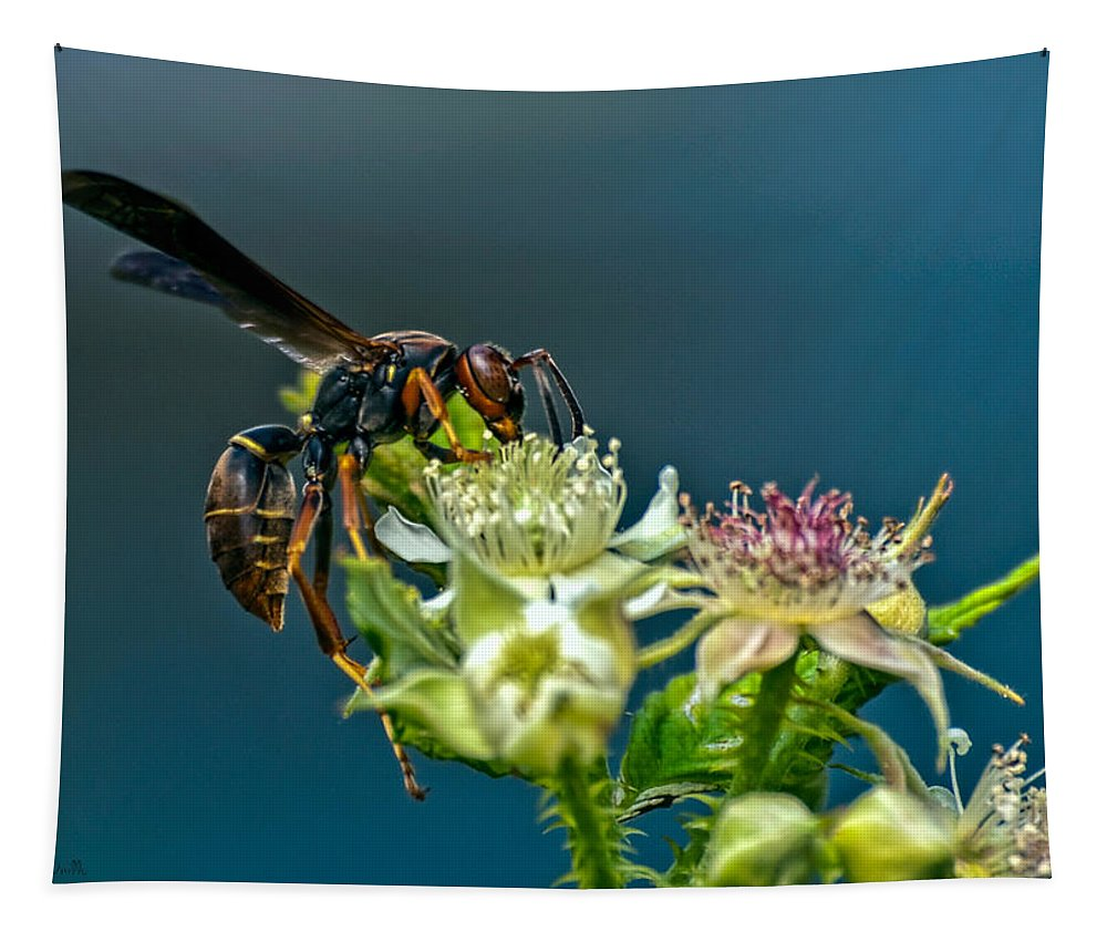 Wasps Tapestry featuring the photograph Wasp by Bob Orsillo
