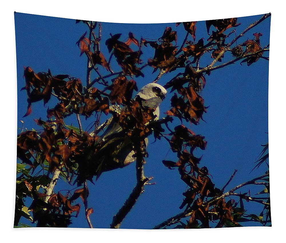 Paul Wilford Tapestry featuring the photograph Watchful Eye by Paul Wilford