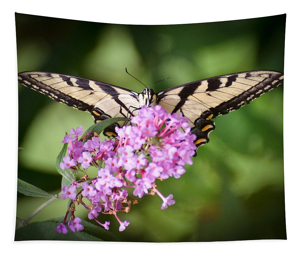Tiger Swallowtail Butterfly Tapestry featuring the photograph Watching by Kerri Farley