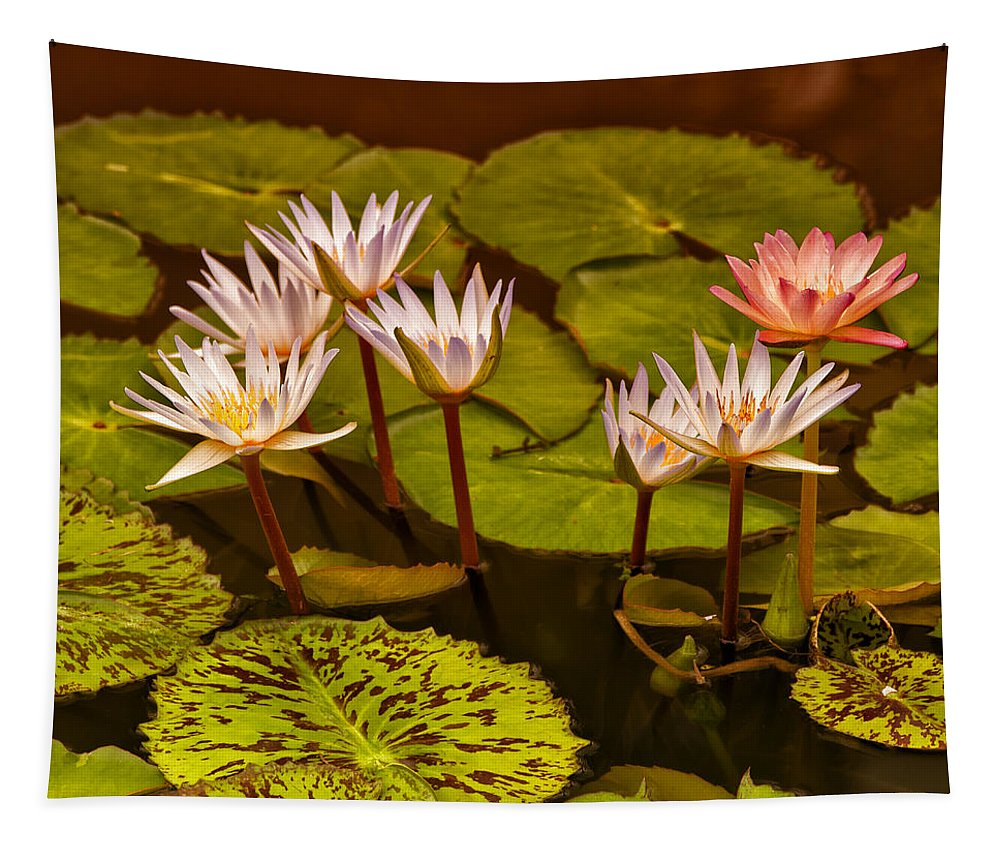 Water Lilies Tapestry featuring the photograph Water Lilies Img_6388 by Greg Kluempers