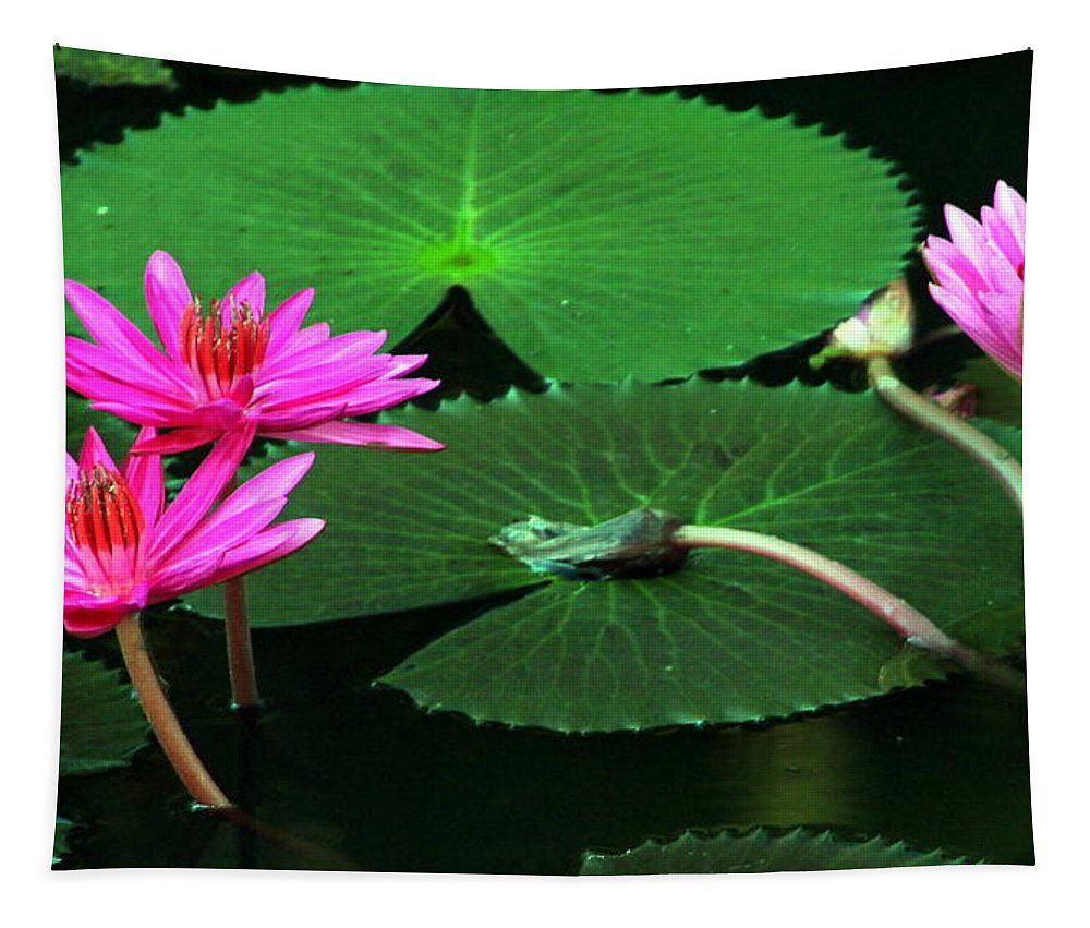 Water Lily Tapestry featuring the photograph Water Lillies In Pink by Laurel Talabere