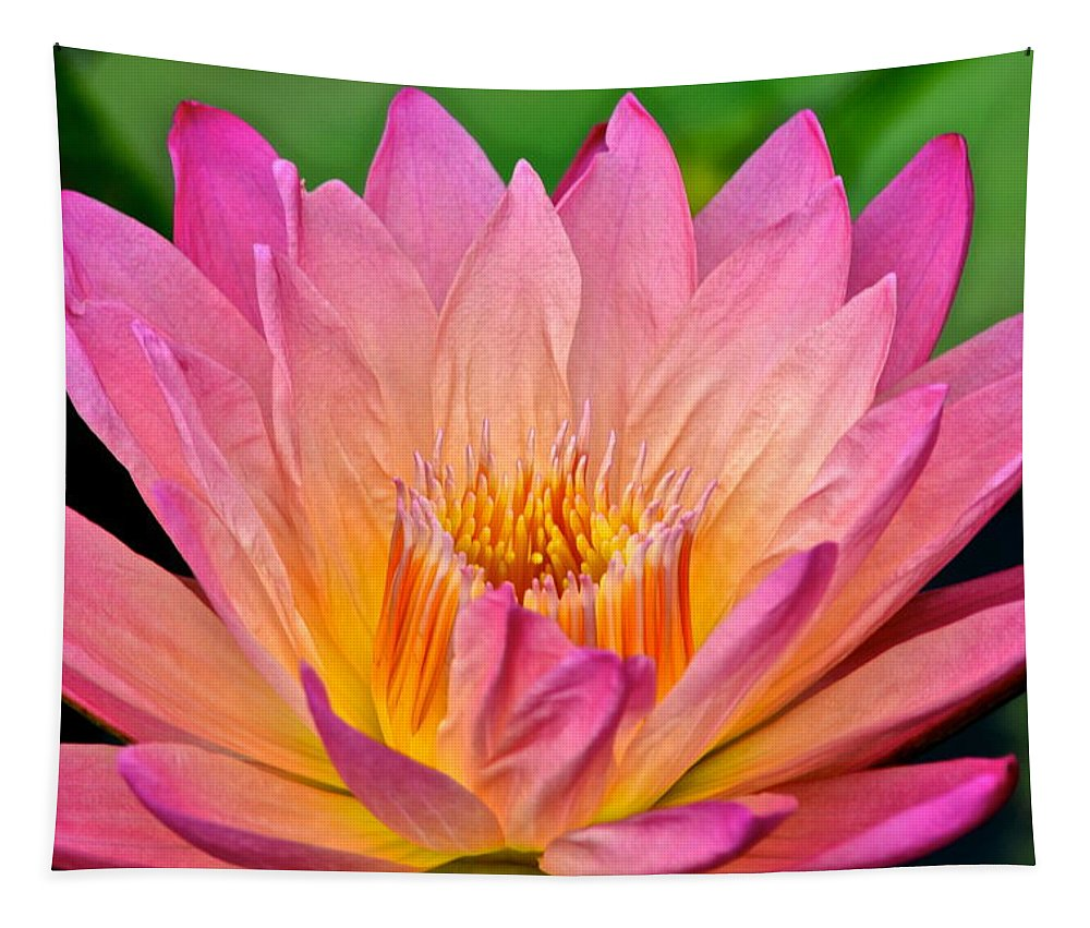 Lily Tapestry featuring the photograph Water Lily by Frozen in Time Fine Art Photography