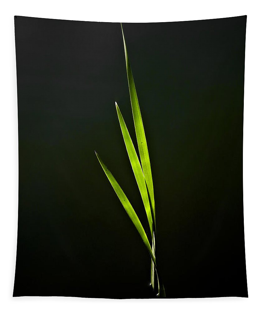 Reed Tapestry featuring the photograph Water Reed Abstract by David Pyatt