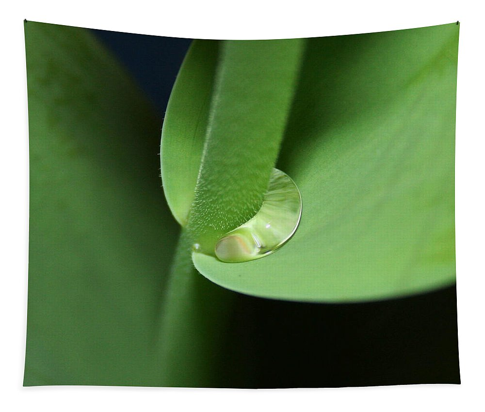 Fine Art Tapestry featuring the photograph Water Worm by Linda Sannuti