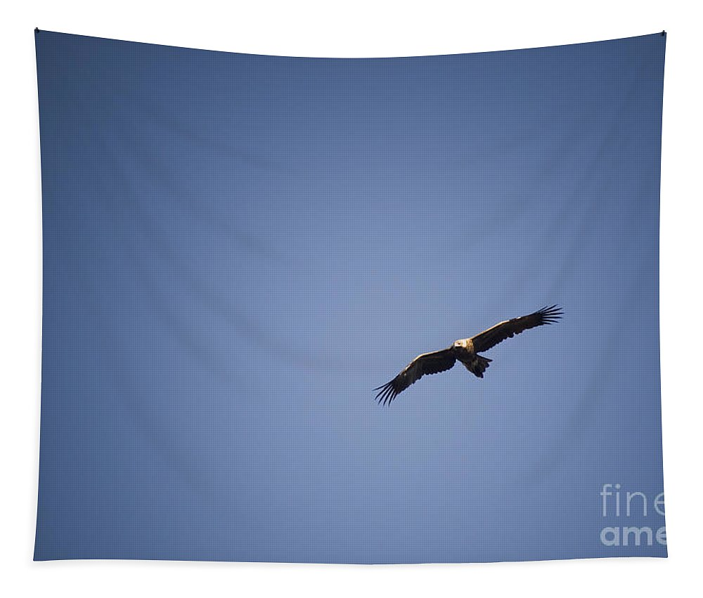 Aerodynamics Tapestry featuring the photograph Wege-tail Eagle by Tim Hester